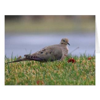 Dove Bird Card