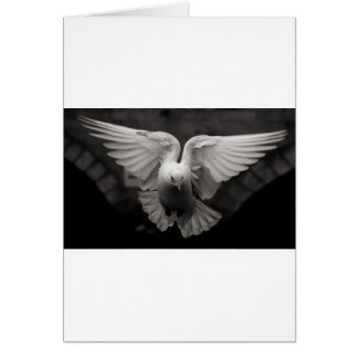 Dove Card