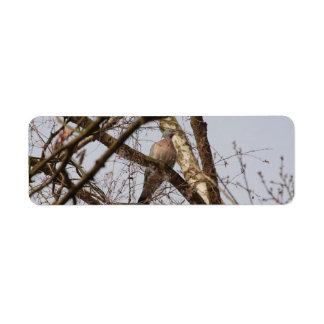 dove in bare tree label