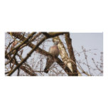 dove in bare tree rack card template