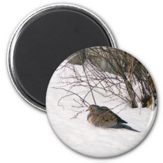 Dove in the Snow Magnet