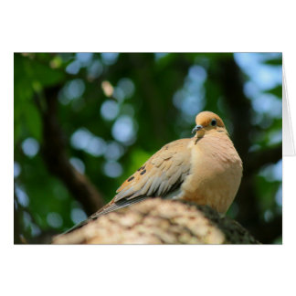 Dove note/greeting card 2