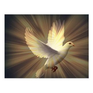 Dove of peace. postcard