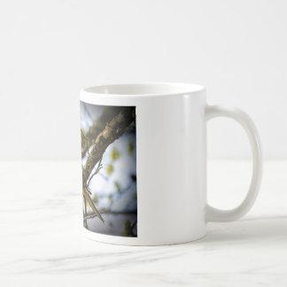 Dove on a Limb Coffee Mugs