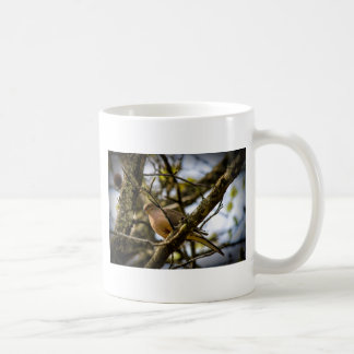 Dove on a Limb Mugs