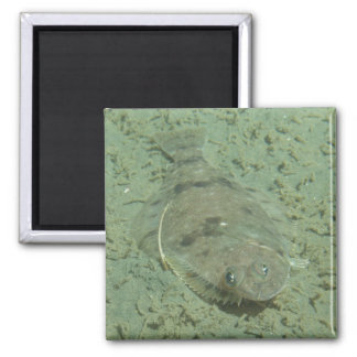 Dover Sole Fish 2 Inch Square Magnet