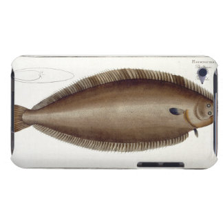Dover Sole (Solea Solaea) plate XLV from 'Ichthyol iPod Touch Cover