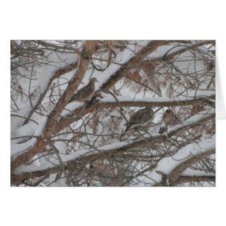 Doves In Snowy Pine Card