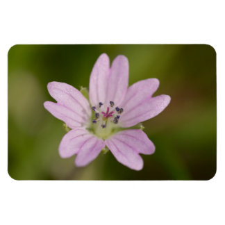 Dovesfoot Geranium Magnet
