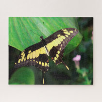 Dovetail Butterfly Jigsaw Puzzle