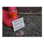 Down in the Ducks Postcard