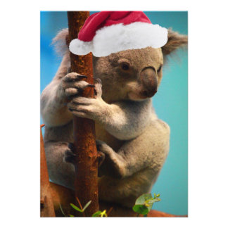 Down Under Christmas Koala Personalized Announcement