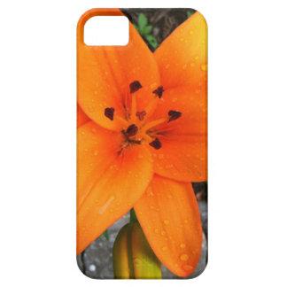 download jpg iPhone 5 carcasa
