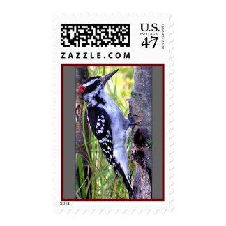 Downy Bird Stamps
