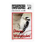 Downy Woodpecker 8998-x-  Postage Stamp-customize