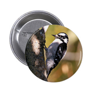 Downy Woodpecker Button