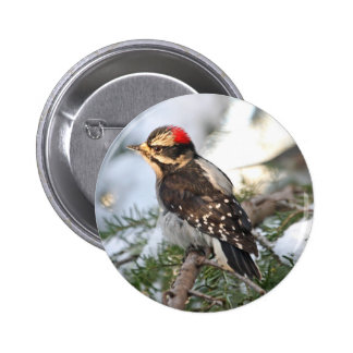 Downy Woodpecker Pinback Button