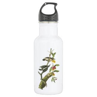 Downy Woodpecker by Audubon Stainless Steel Water Bottle