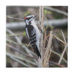 """Downy Woodpecker Ceramic Tile<br><div class=""""desc"""">Local Exploration is the name of my blog online (www.local-exploration.com),  which combines my love for hiking and wildlife through photography.  The photographs used on these products were taken by me from my adventures around the Mid-Hudson Valley in New York and my occasional excursions out of the state.</div>"""