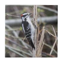 Downy Woodpecker Ceramic Tile