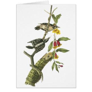 Downy Woodpecker - John Audubon Card