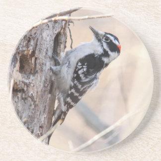 Downy Woodpecker Sandstone Coaster