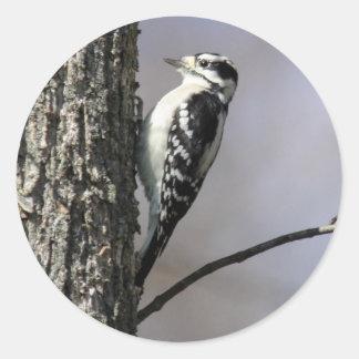 Downy Woodpecker Round Sticker