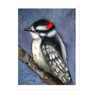 Downy Woodpecker Watercolor Postcard