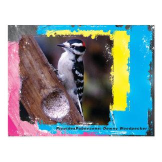 DownyCard Postcard