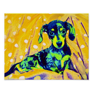 doxie azul póster