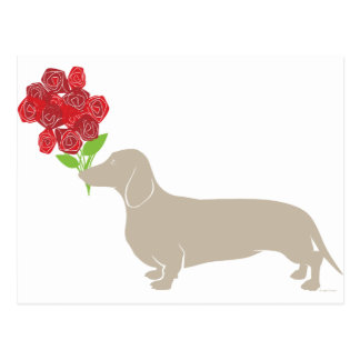 Doxie Delivers 12 Red Roses - Valentines Day!!!! Post Card