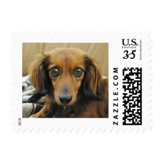 Doxie Doll Stamp