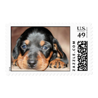 Doxie Pup Postage