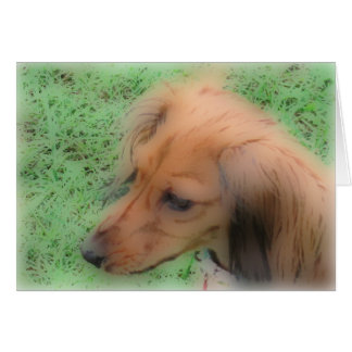 Doxie soft card