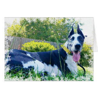 Dozer the Therapy Dog Greeting Card