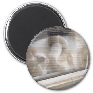 Dozing Off In the Mid Day Sun 2 Inch Round Magnet
