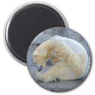 Dozing Polar Bear 2 Inch Round Magnet