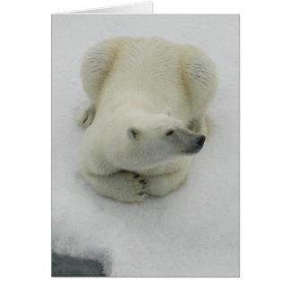 Dozing Polar Bear Card