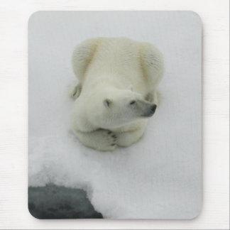 Dozing Polar Bear Mouse Pad