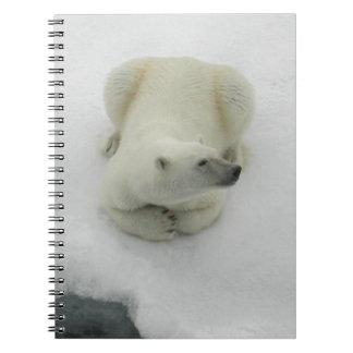 Dozing Polar Bear Spiral Notebooks
