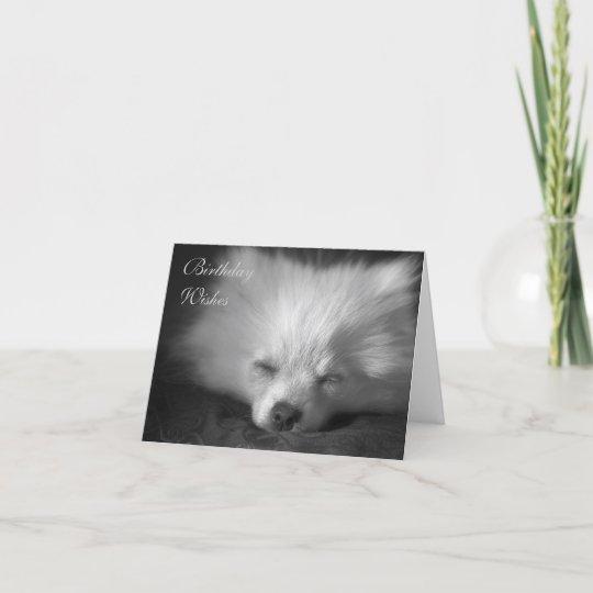 Dozing Pomeranian Birthday Card Zazzlecom