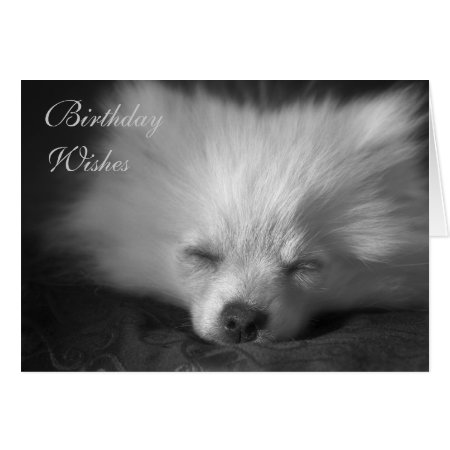 Dozing Pomeranian birthday card