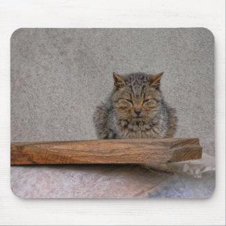 dozing tiger-cat mouse pad