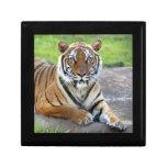 DPZ-Tiger1-10x10 Caja De Joyas