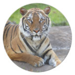 DPZ-Tiger1-10x10 Party Plates