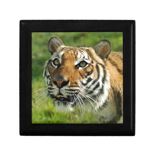 DPZ-Tiger2-10x10 Caja De Recuerdo