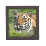 DPZ-Tiger2-10x10 Caja De Regalo De Calidad