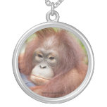Dr. Ann, Orangutan of OFI Jewelry