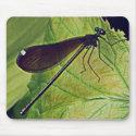 Draagon fly mousepad mousepad