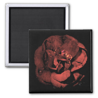 Dracula s Camellia Fridge Magnets